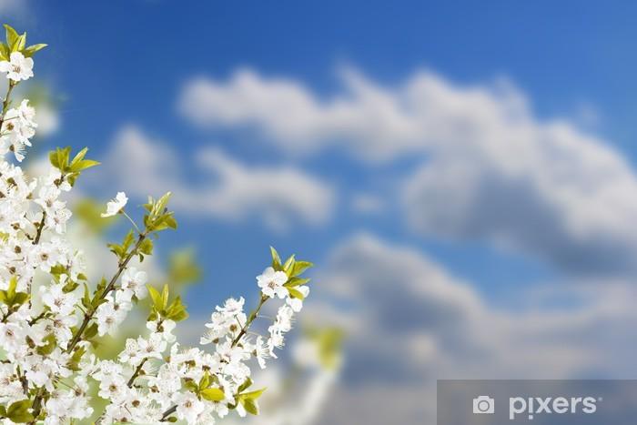 Vinyl-Fototapete Zweig mit weißen Blumen - Bäume