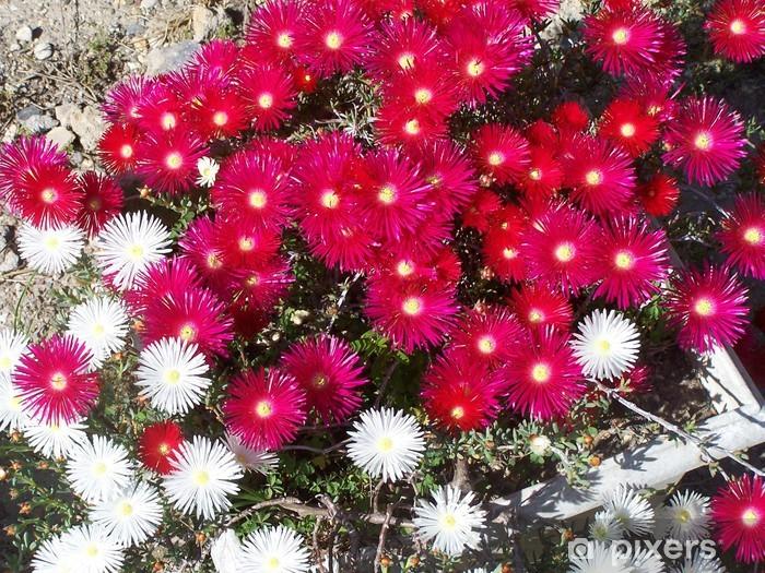 Naklejka Pixerstick Czerwone i białe Ficoides - Kwiaty