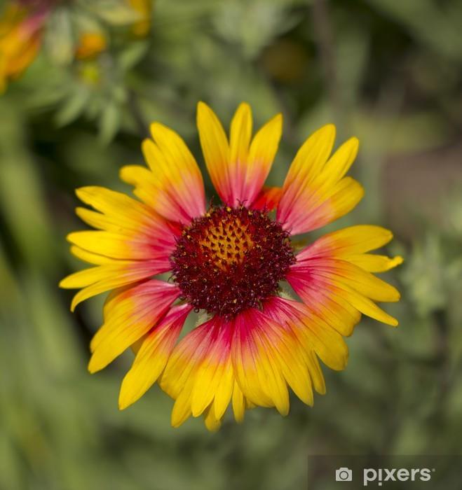 Sticker Pixerstick Gaillarde hybrida fleur - Fleurs