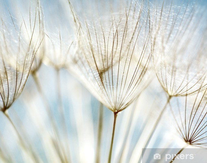 Abstract dandelion flower background Vinyl Wall Mural - Themes