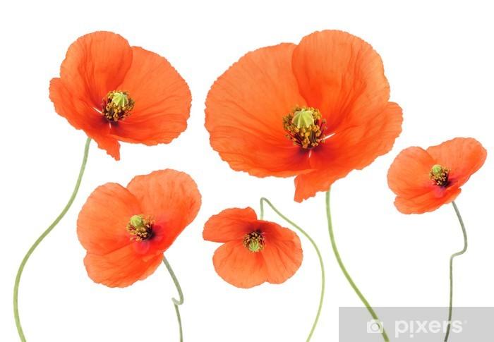 Nálepka Pixerstick Vlčí máky - Květiny