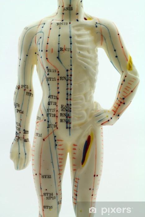 Papier peint vinyle Akupunktur Modèle - Oberkörper eines Mannes - Meridiane - Santé et médecine