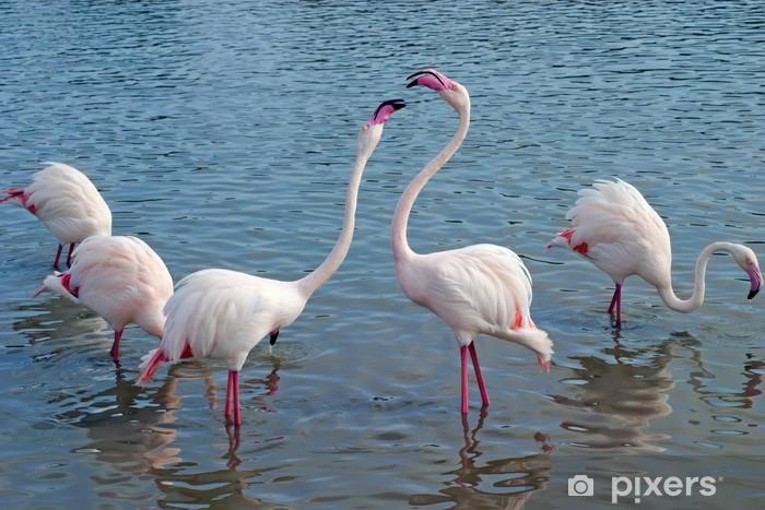 Fototapeta winylowa Flaming - Ptaki