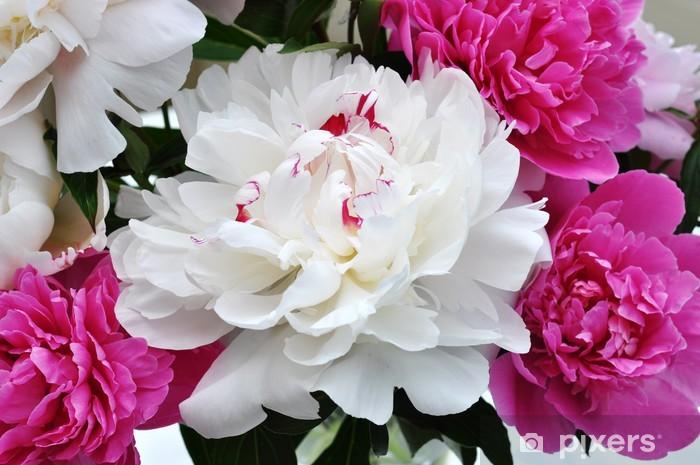 Nálepka Pixerstick Pfingstrosen - Květiny