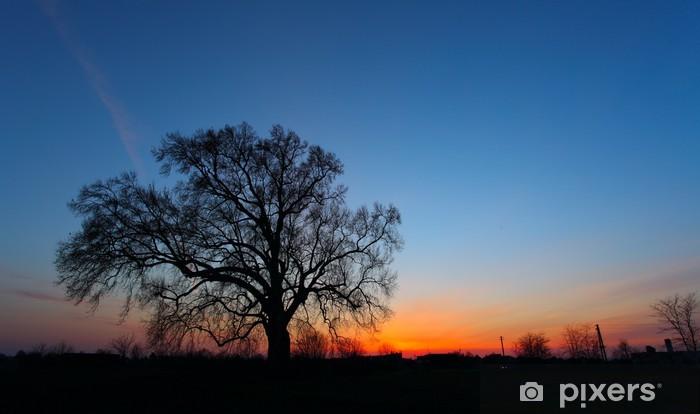 Vinyl-Fototapete Bild Schöne Landschaft mit Bäumen Silhouette bei Sonnenuntergang. - Bäume