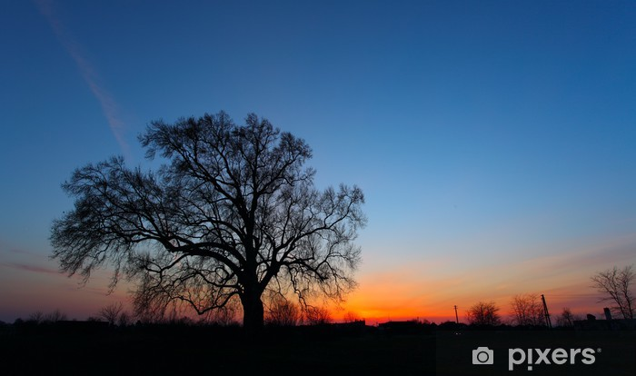 Beautiful landscape image with trees silhouette at sunset Vinyl Wall Mural - Trees