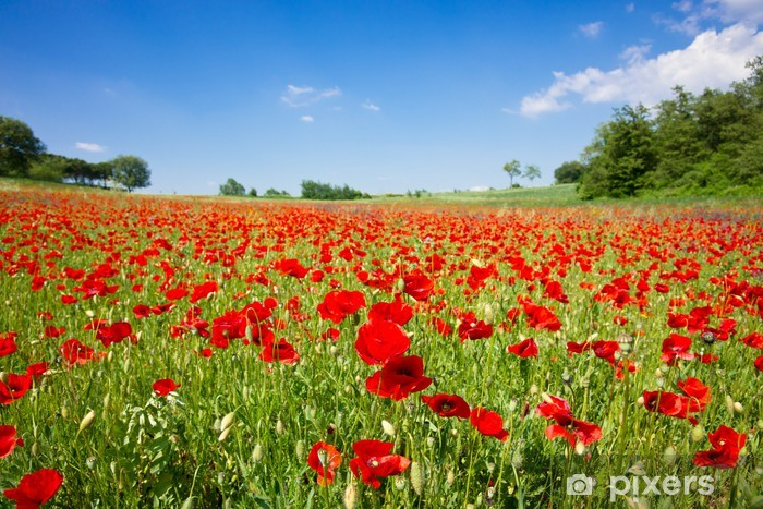 Poppy field Pixerstick Sticker - Themes