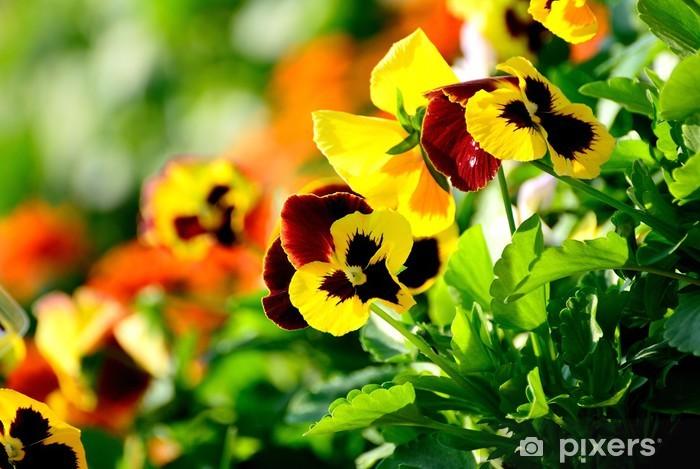 Naklejka Pixerstick Kwiaty Pansy - Kwiaty