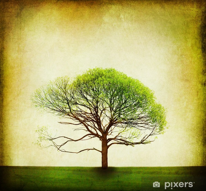 Papier peint vinyle Nature Conception. Vintage fond d'arbre - Maisons et jardins
