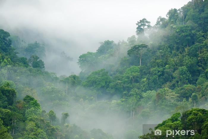 Sademetsä aamulla sumussa Itsestäänkiinnittyvä valokuvatapetti -