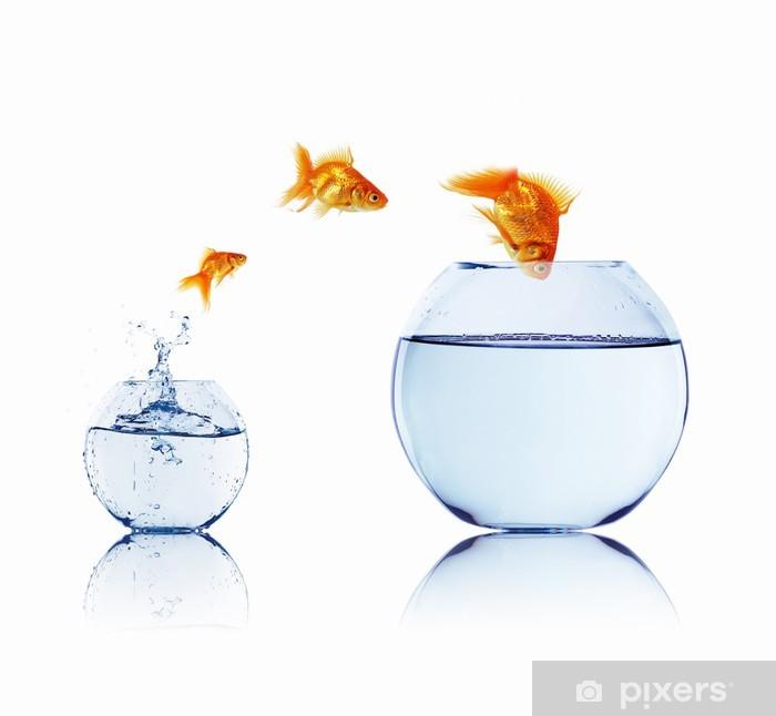 Plakat Złoty ryb w akwarium - iStaging