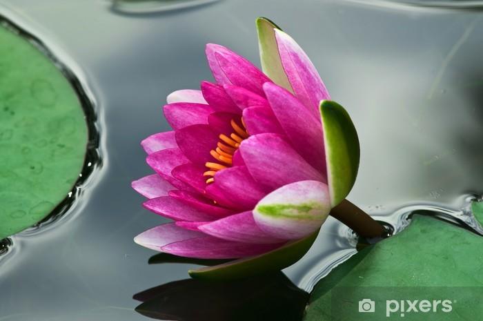 Nálepka Pixerstick Ninfea fiori 1343 - Květiny