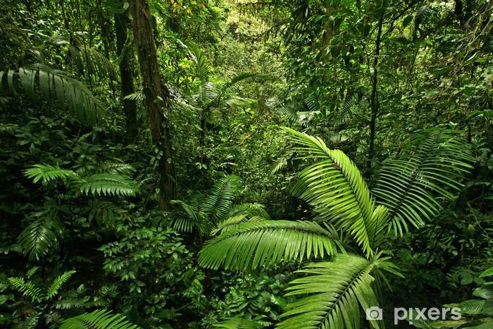 Fototapet av vinyl Tett tropisk regnskog -