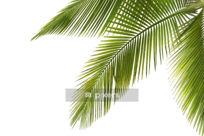 Adesivo da Parete Palma - Alberi e foglie