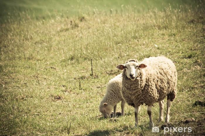 Papier peint vinyle Moutons sur les pâturages - Mammifères