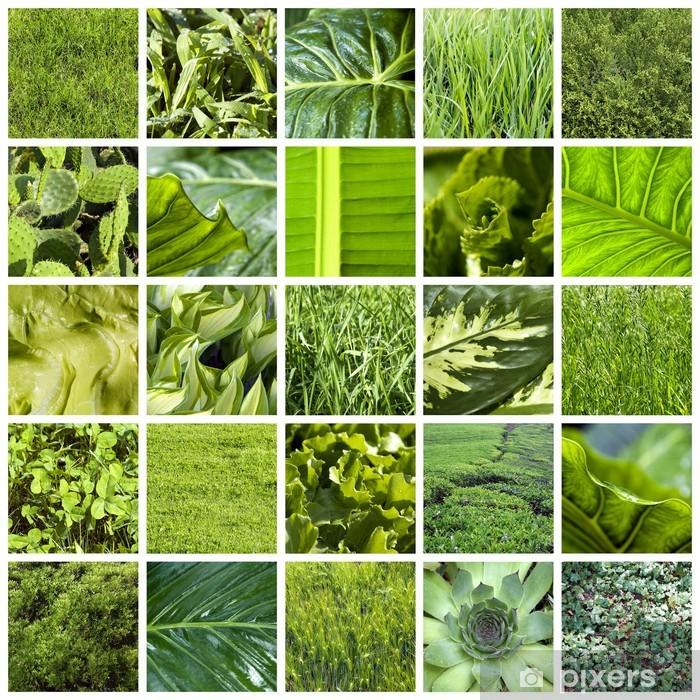 Green Collage Debandje