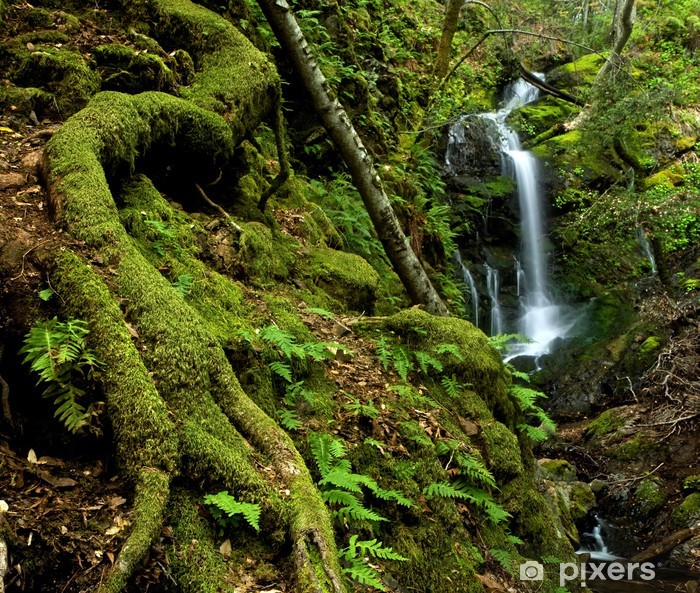 A rain forest waterfall with large roots and ferns Vinyl Wall Mural - Themes