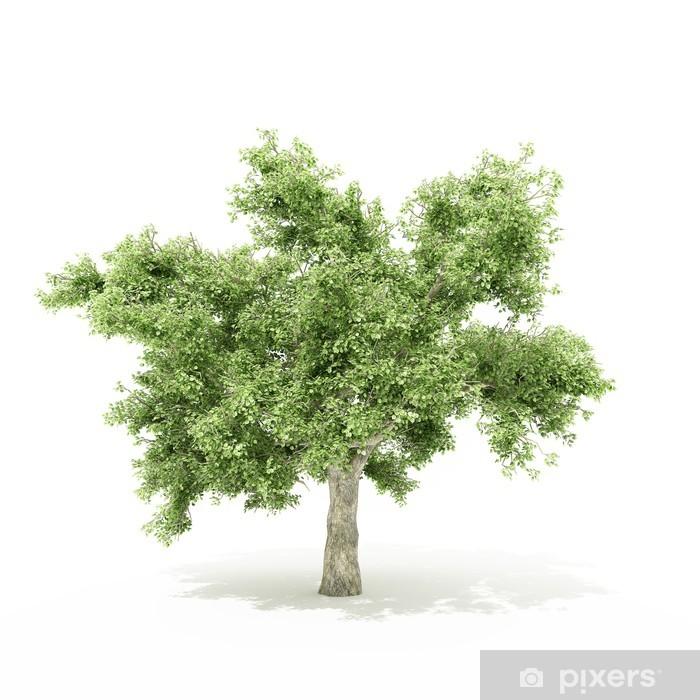 Pixerstick Aufkleber Infografik Baum - Bäume