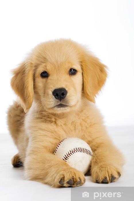 Carta Da Parati Cucciolo Golden Retriever Con Una Palla Da Baseball
