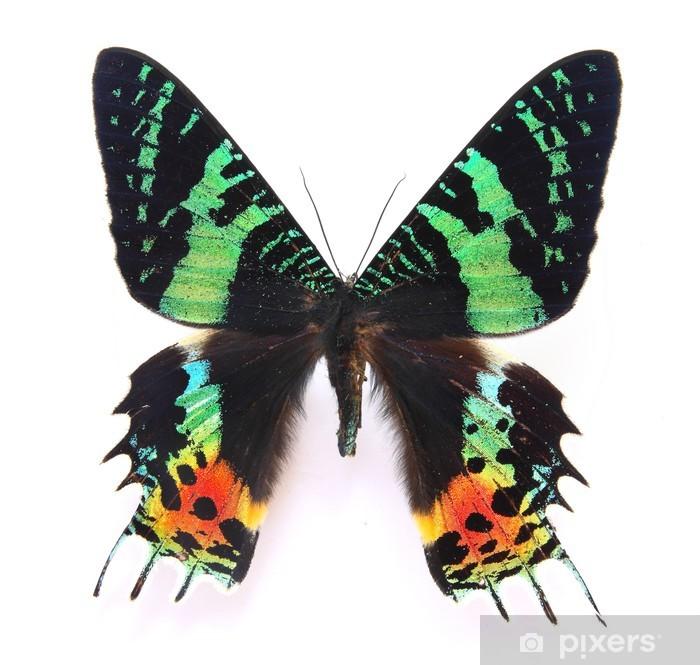 Nálepka Pixerstick HD Krásné exemplářů motýlů - Témata