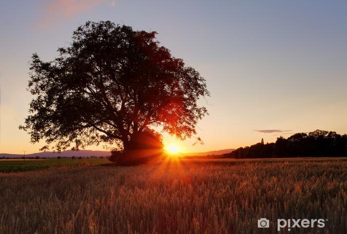 Vinilo Pixerstick Silueta del árbol en el campo con el grano - Temas