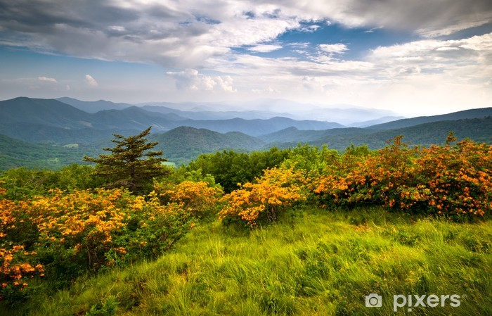 Vinylová fototapeta Flame Azalea Blooms Blue Ridge Mountains Roan Appalachian Trail - Vinylová fototapeta