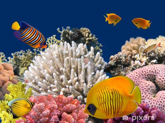 Vinyl Fotobehang Onderwater leven van een hard-koraalrif, Rode Zee, Egypte - Koraalrif