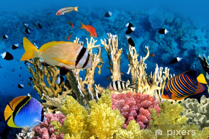 Tropical Fish and Coral Reef Pixerstick Sticker - Coral reef