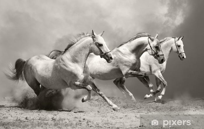 Naklejka Pixerstick Białe konie w kurzu -