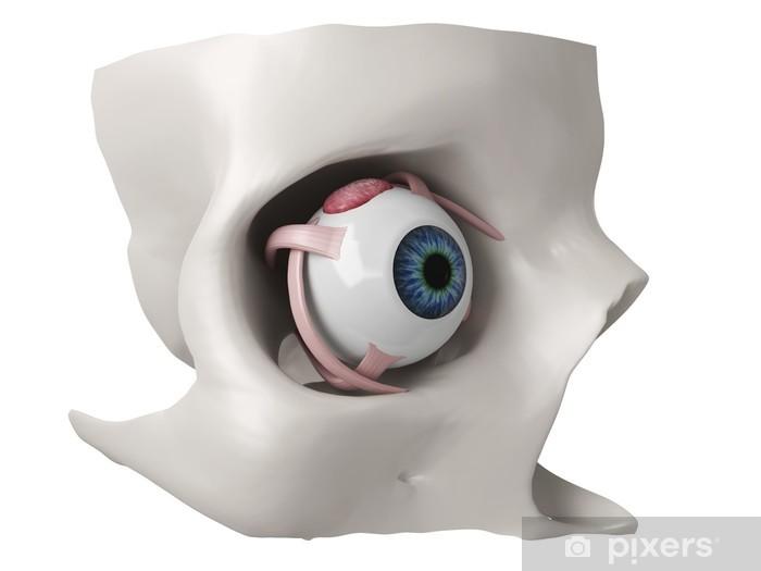 3d Eye Anatomy Model Wall Mural Pixers We Live To Change
