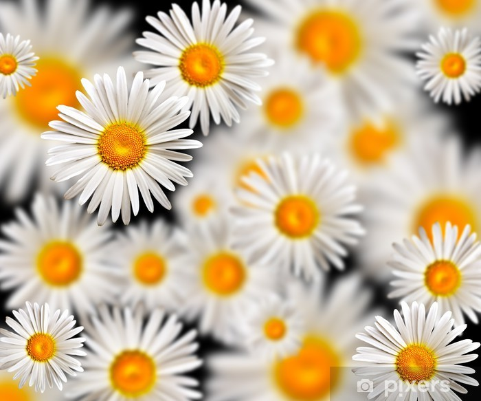 chamomile Poster - Backgrounds