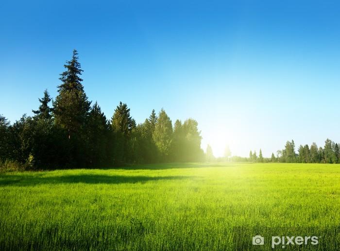 Papier peint vinyle Champ de printemps et le coucher du soleil - Saisons