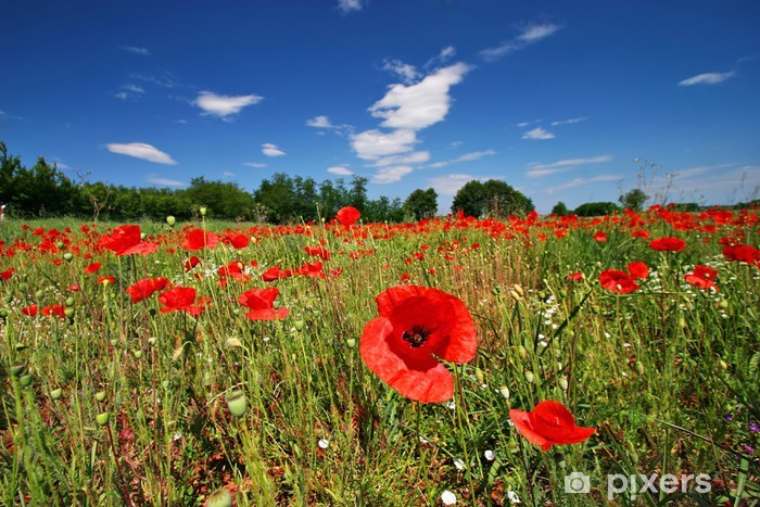 poppy Vinyl Wall Mural - Flowers