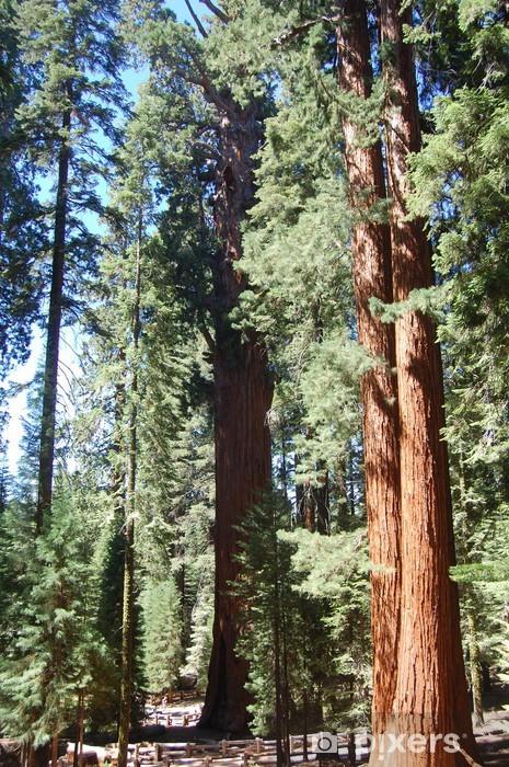 Papier peint vinyle Sentier sequoia - Amérique