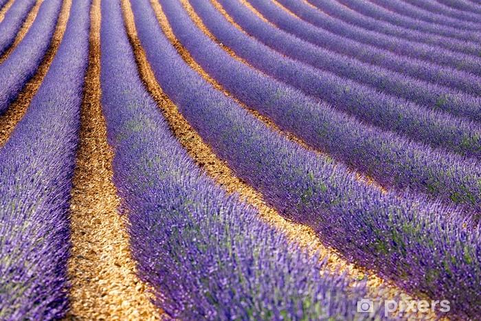 Naklejka Pixerstick Francja Prowansja lawendy / Lawendowe pole w Prowansji, Francja - Europa
