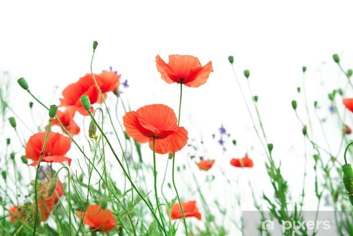 Fototapeta winylowa Kwiat maku - Kwiaty