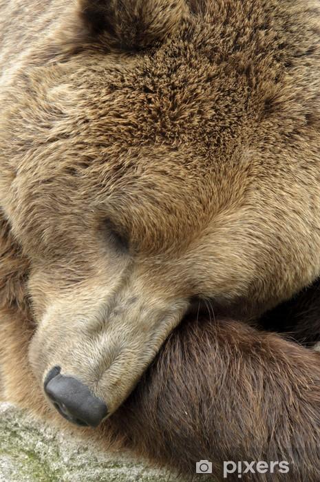 Fototapeta winylowa Mężczyzna niedźwiedź brunatny - Tematy