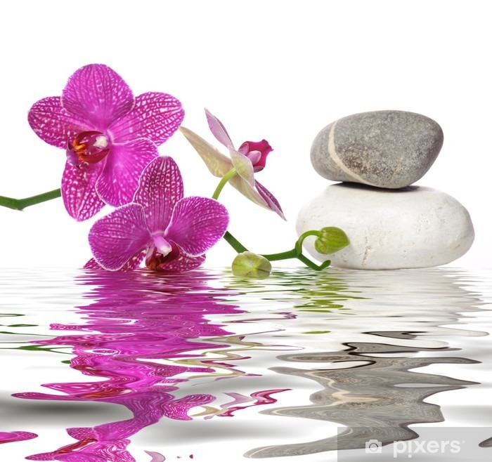 Papier Peint Autocollant Il vous suffit de belles orchidées - Bestsellers