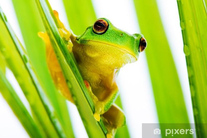 Naklejka Pixerstick Mała zielona żaba drzewo na gospodarstwo drzewa palmowego - Żaby