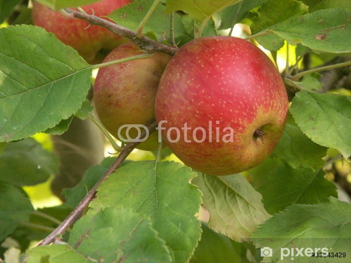 Naklejka Pixerstick Pomme rouge Boskoop - Posiłki
