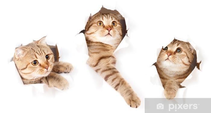 Papier peint vinyle Mettre un chat dans des trous latéraux papier déchiré isolé - Thèmes