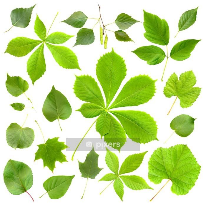 Adesivo da Parete Leafes Green impostare isolato - Adesivo da parete