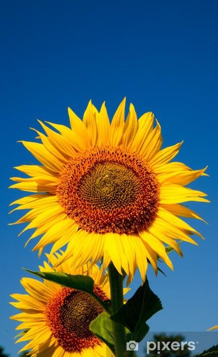 Vinyl-Fototapete Sonnenblumen vertikalen - Jahreszeiten