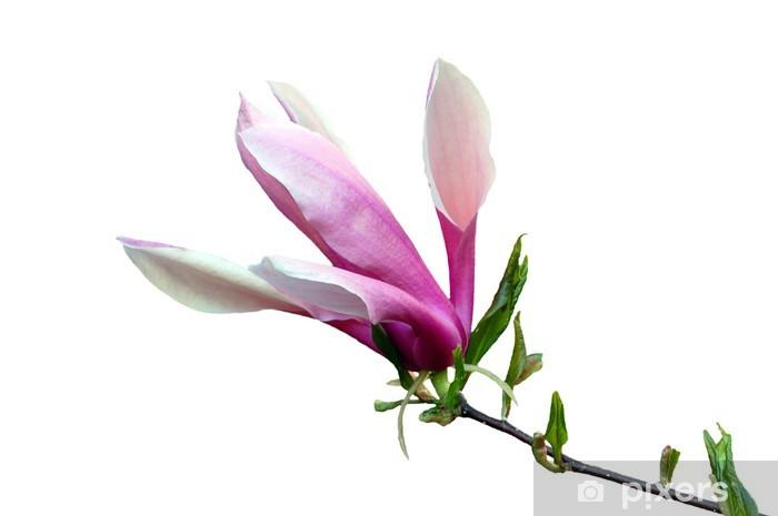Sticker Pixerstick Fleur de magnolia - Maisons et jardins