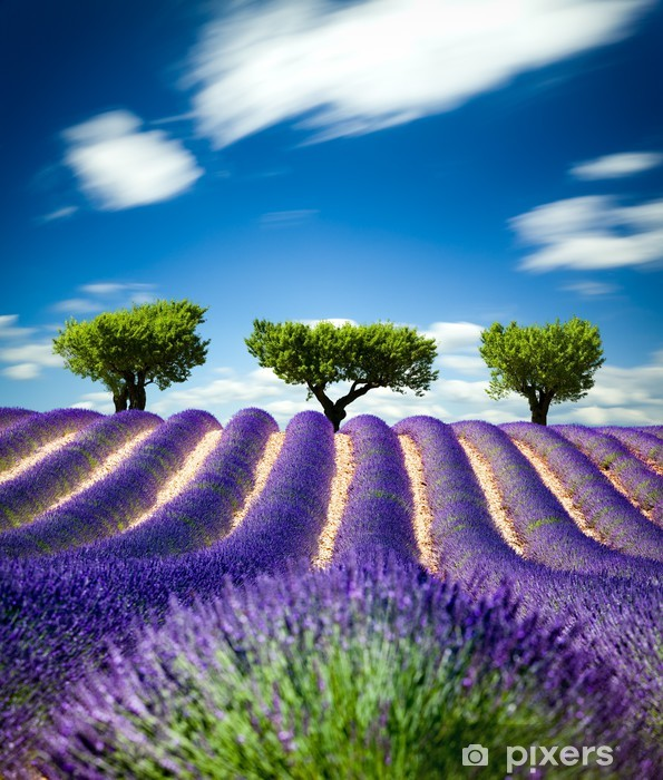 Sticker pour frigo Lavande Provence France / champ de lavande en Provence, France -