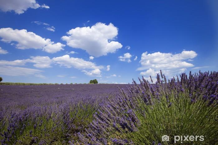 Naklejka Pixerstick Lavender Valensole - Style