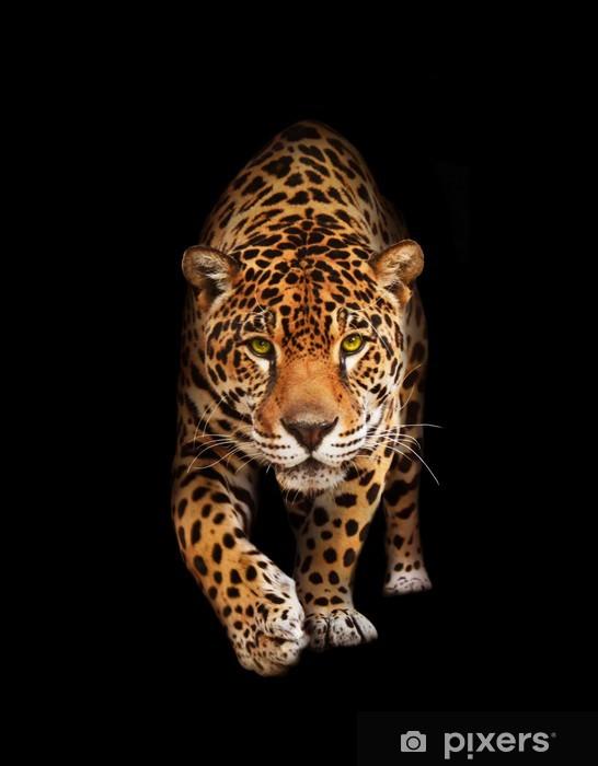 Vinilo para Nevera Jaguar en la oscuridad - vista delantera, aislada -