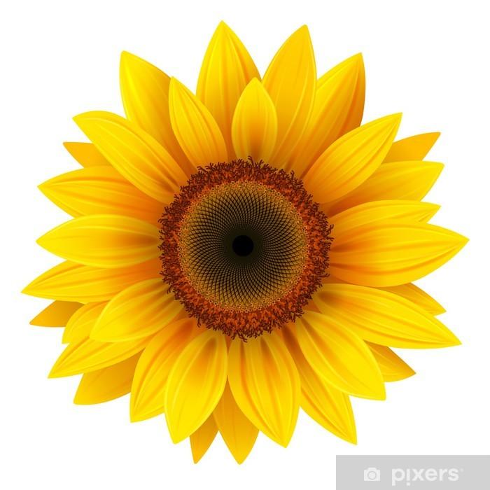 Sunflower isolated, vector. Vinyl Wall Mural -