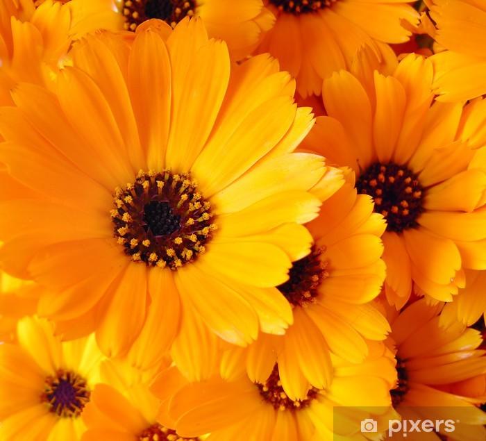 Sticker Pixerstick Fleurs de Calendula - Thèmes