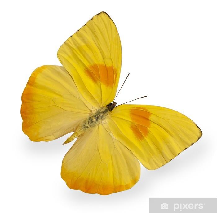 Sticker Pixerstick Papillon jaune isolé sur blanc - Autres Autres